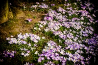 Kölner Flora im März