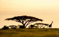 Tansania_070