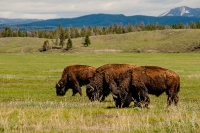 Yellowstone_uA_029