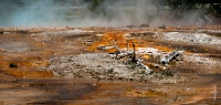 Yellowstone_uA_038