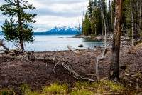Yellowstone_uA_071