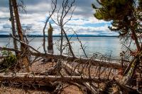 Yellowstone_uA_072
