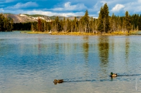 Yellowstone_uA_080