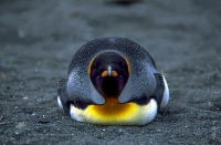 Antarktis_012