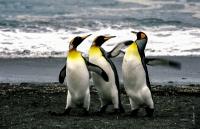 Antarktis_014