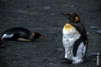 Antarktis_015