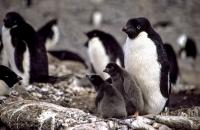 Antarktis_022