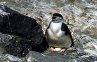 Antarktis_032