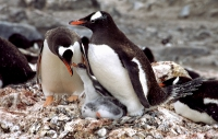 Antarktis_033