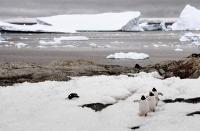 Antarktis (Winter 1998-1999)
