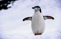 Antarktis_036